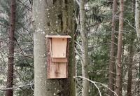 Leitfaden für Förster*innen zum Fledermausschutz im Wald