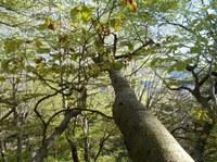 A2) Erhalt von Waldstruktur