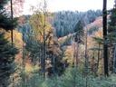 D2) Evidenzbasiertes Biodiversitätsmanagement