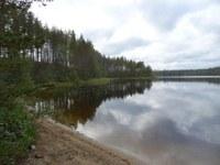 Forest retention across borders: ConFoBi visits Finland