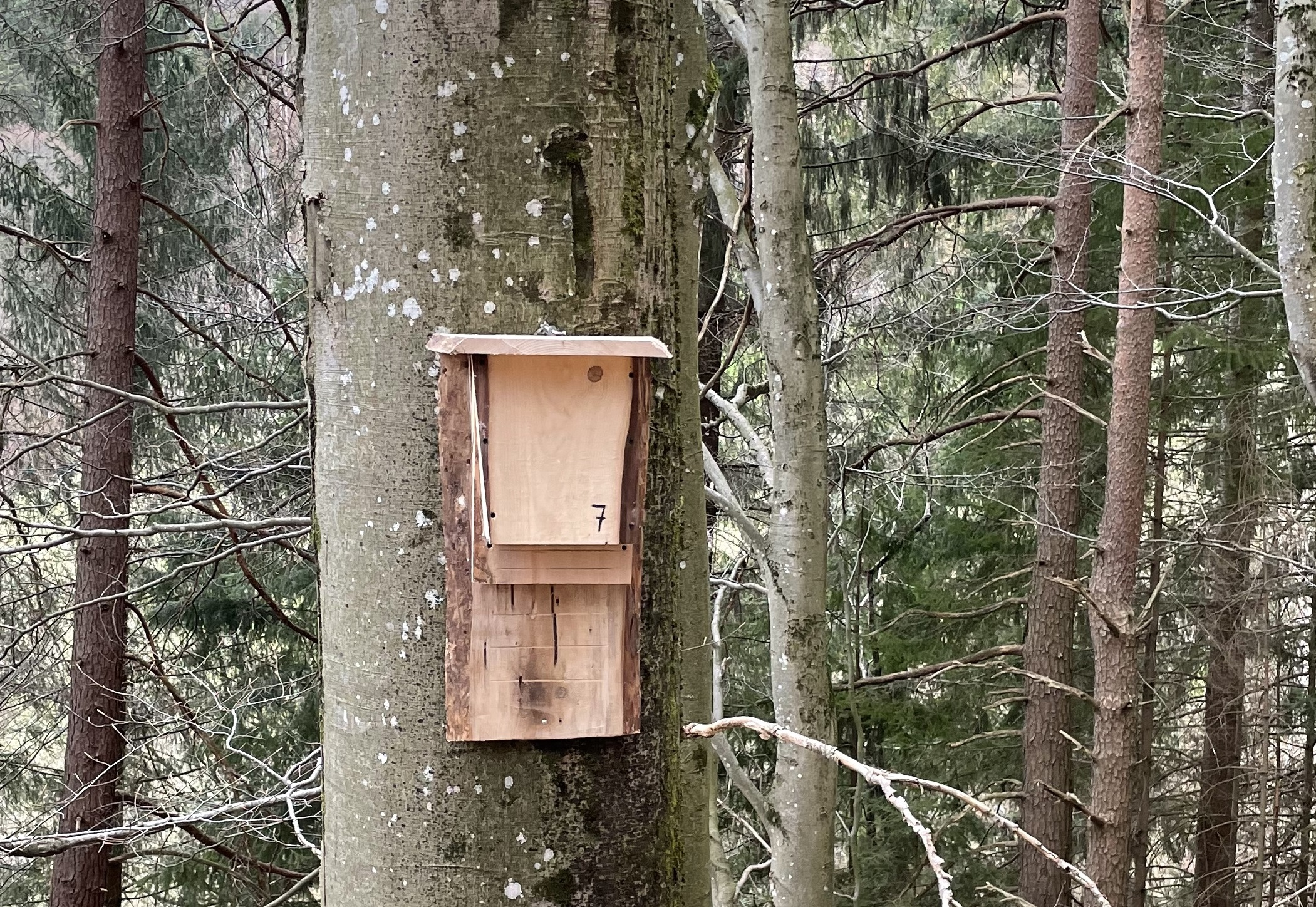 Guide for foresters on bat protection in the forest