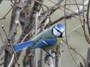 B6) Bird-Forest Relationships
