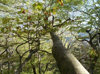 A2) Retaining Forest Structure